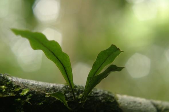 Natural World (7)
